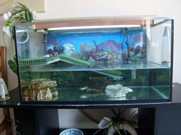 You are currently viewing L'aquarium de Minette